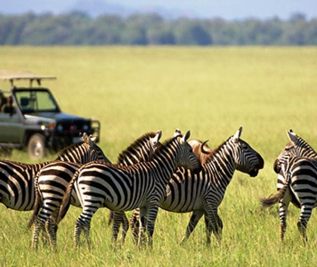 Lake Mburo Wildlife Safari