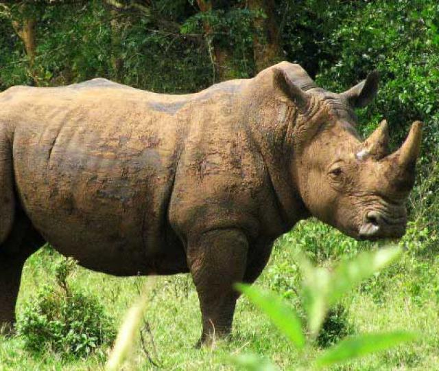 Ziwa Rhino Sanctuary and Murchison Falls Safari