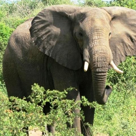 Transfer to Queen Elizabeth National Park, Game Drive and Boat Cruise