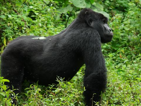 Bwindi Gorilla Trekking And Lake Mburo Safari